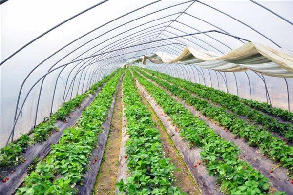 3月份适合种植什么蔬菜?附种植指南分享