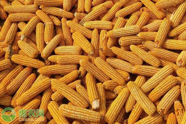 黑龙江玉米市场月报(202102)