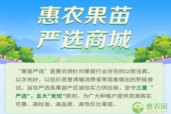 惠农网:春耕农资供需两旺,种子种苗交易额年均增长312%