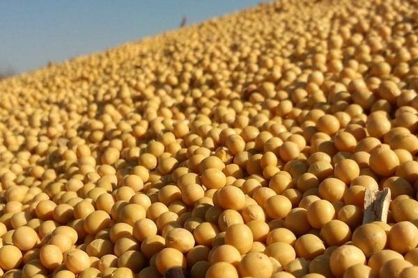 2021年4月份全国大豆价格最新行情