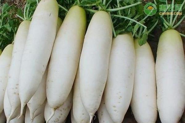 栽培方法不当,萝卜会出现异形症状吗?
