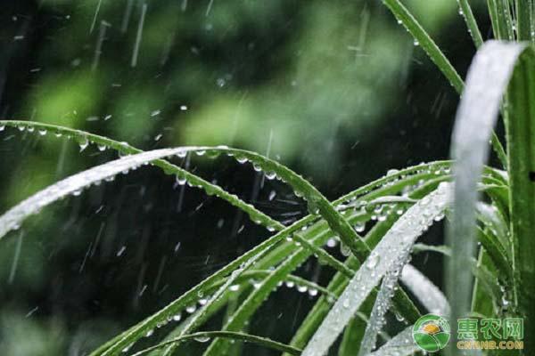谷雨前后会下雨吗?描写谷雨的诗句有哪些?