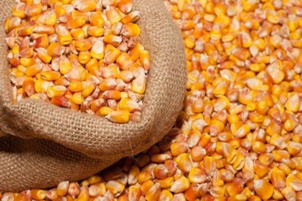 中国十强玉米种排行榜