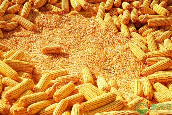 玉米价格还会下跌吗?(附2021年最新玉米价格表)