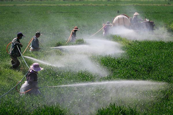 种植的小麦出现缺苗断垄,该如何补救避免减产?