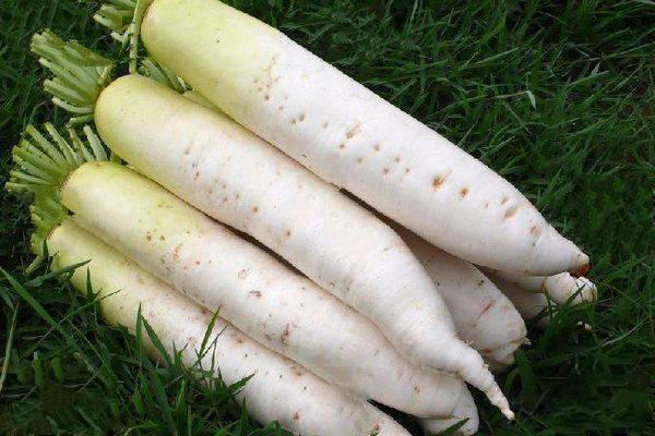 萝卜对土壤有哪些要求?种植萝卜如何正确施肥?
