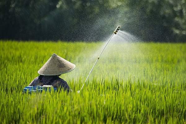 七月正值高温天气时,喷洒农药都有哪些要注意的地方?