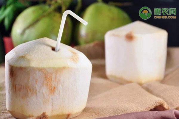 椰子有哪些常见品种?