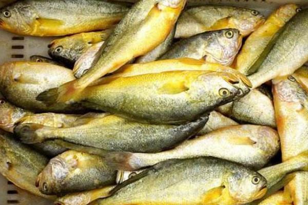 我国黄花鱼主产地在哪几个省?