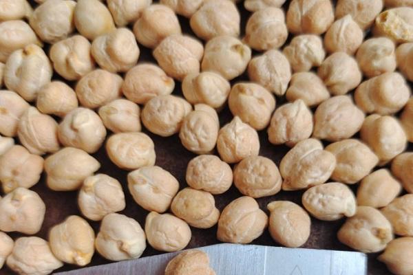 鹰嘴豆产地在哪?鹰嘴豆该怎么选?