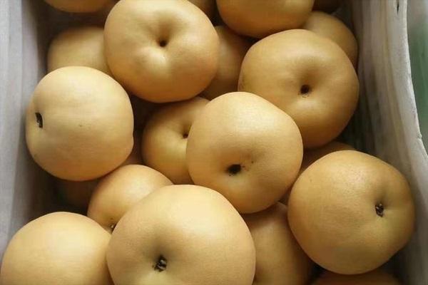 中國最好吃的梨子排名
