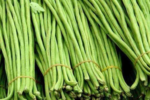 豇豆在出芽期能不能澆水?需要怎么管理?