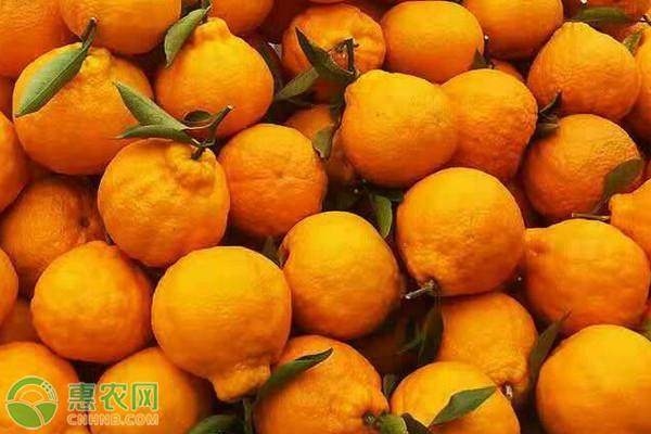 丑橘酸如何催熟?