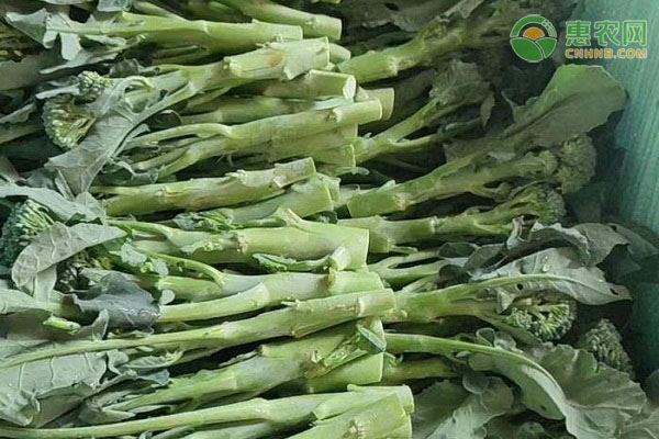西兰苔和西兰花有什么区别?