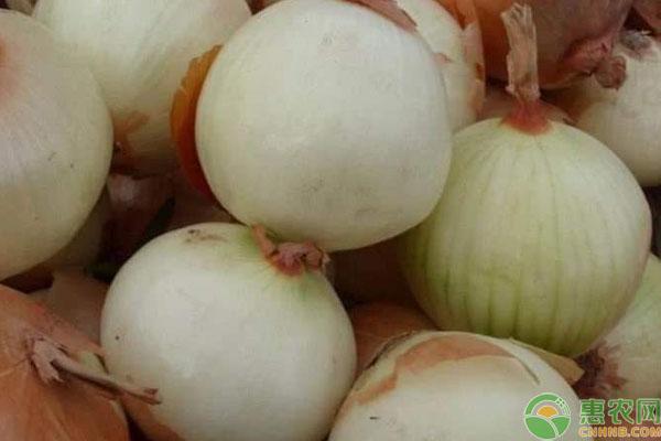 紫色洋葱和白色洋葱的区别有哪些?