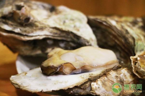 威海牡蛎有何特点?
