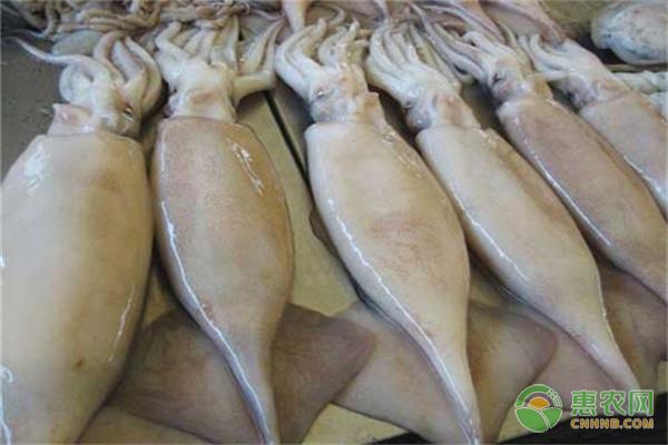 鱿鱼不能跟什么食物一起吃?
