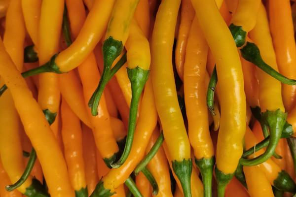 黃貢椒的產地在哪?黃貢椒和黃燈籠有什么區別?