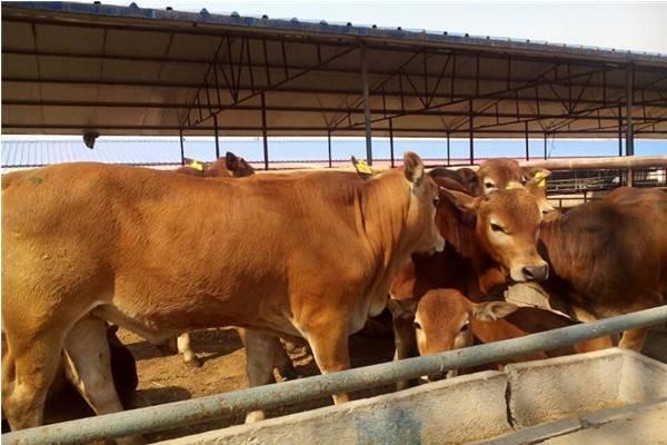 適合農村養殖的致富項目有哪些?
