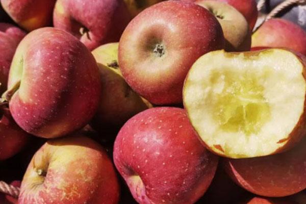 蘋果最佳食用時間表
