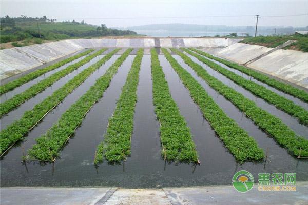 水培种植蔬菜前,都需要准备哪些东西?