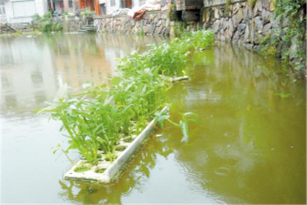 水培種植蔬菜前,都需要準備哪些東西?