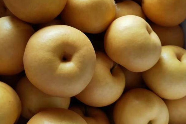 什么品種的梨好吃甜度又高?