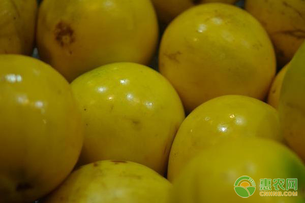 黄晶果产地分布在哪?