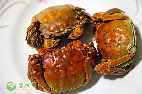 仙桃大闸蟹一天吃几个合适?