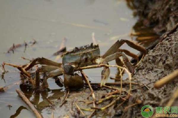 七里海大闸蟹产地在哪?