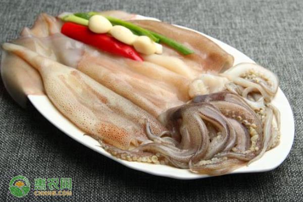黄海鱿鱼产地在哪?
