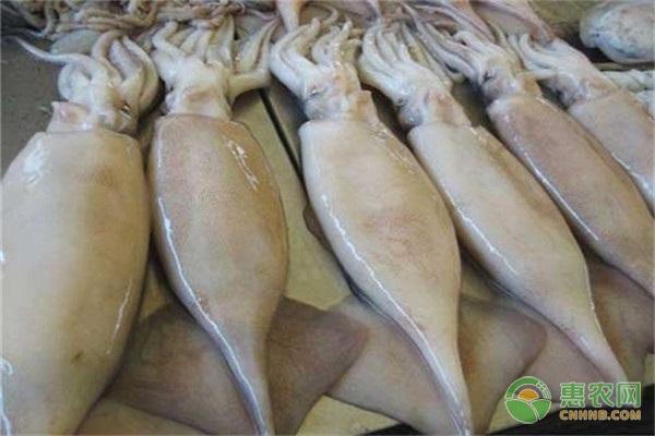鱿鱼和墨鱼的区别是什么?