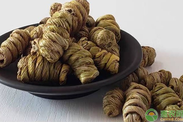 石斛兰和铁皮石斛有什么区别?