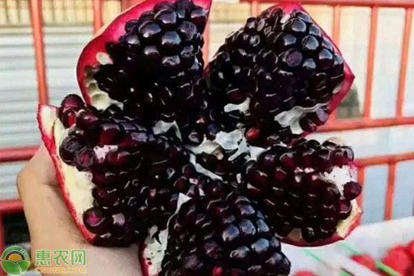 黑籽甜石榴树苗哪里买?