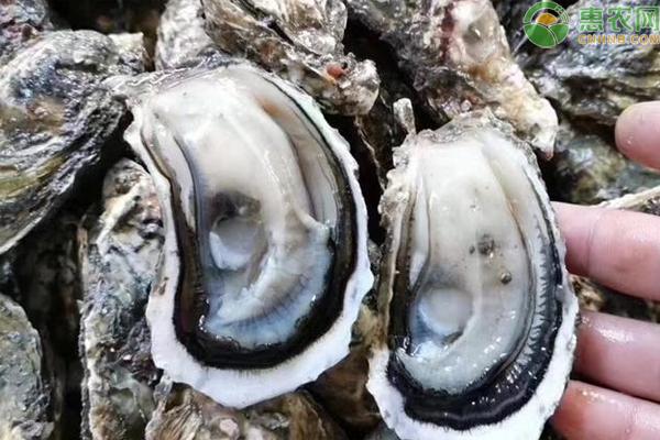 牡蛎和生蚝的区别是什么?