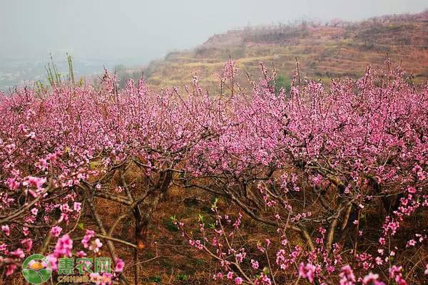 粉色的花卉品种有哪些?