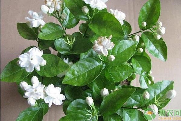 白色的花卉品种有哪些?