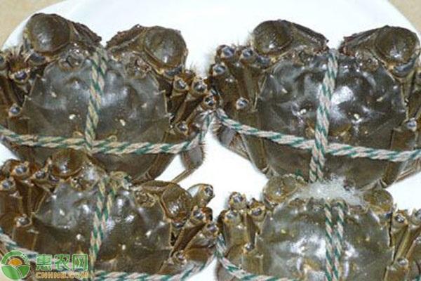 去市场上买大闸蟹,为什么都要用绳子绑起来?
