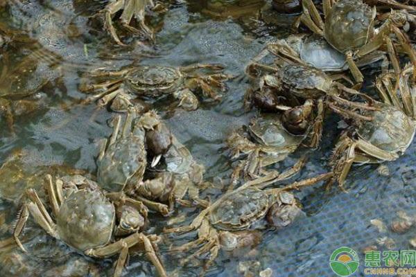 大闸蟹和梭子蟹哪个好吃?