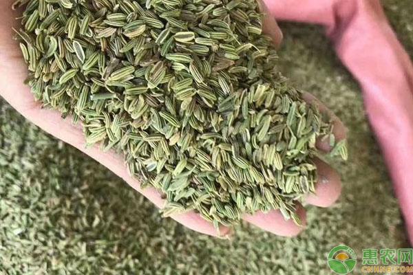 大茴香和小茴香的区别有哪些?