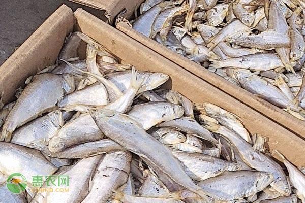 马口鱼和白条鱼、翘嘴鱼有什么区别?