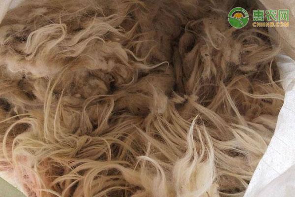 羊绒和羊毛有什么区别?