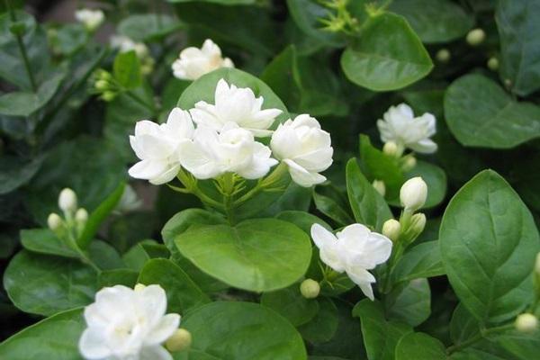 最适合放卧室的十种花