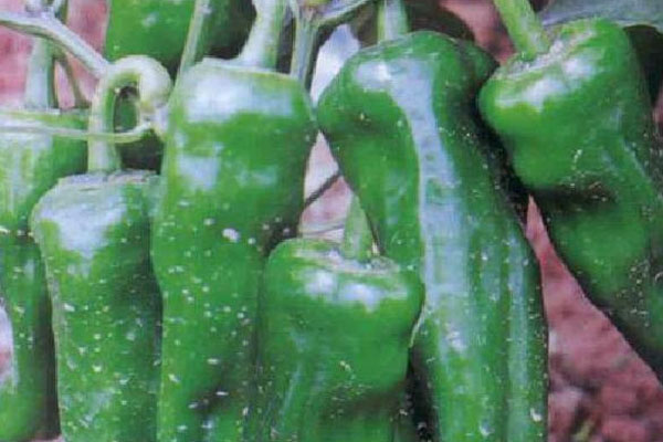 辣椒有哪些品种?