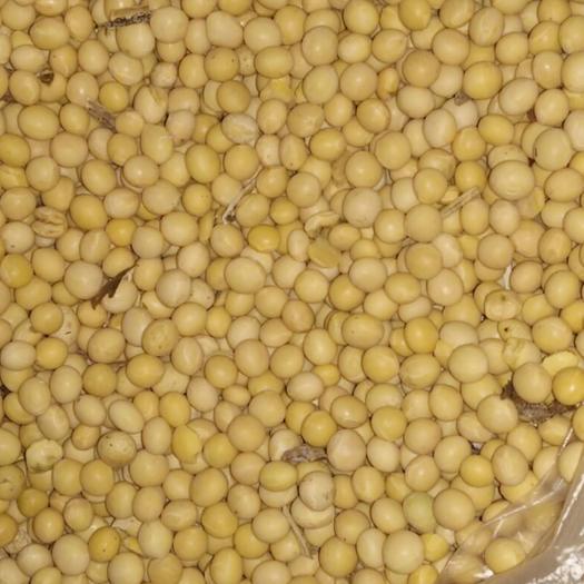 鸡西虎林市垦农30 生大豆 1等品