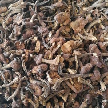 东北野生榛蘑无杂优质一级品质