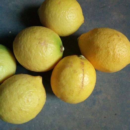 资阳安岳县 黄柠檬四川安岳尤力克2-3级果榨汁泡水皮薄
