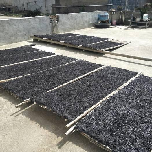 福州福清市沙埔紫菜