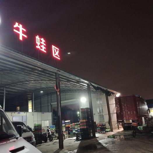 上海寶山 上海牛蛙