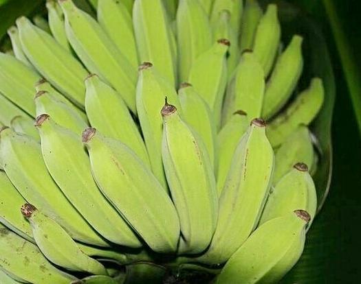 龙岩新罗区土芭蕉 七成熟 40斤以下